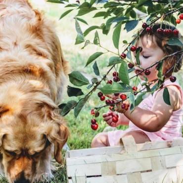 Как отстирать пятна от вишни